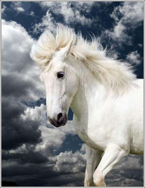اروع واجمل الخيول في صور horses8.jpg